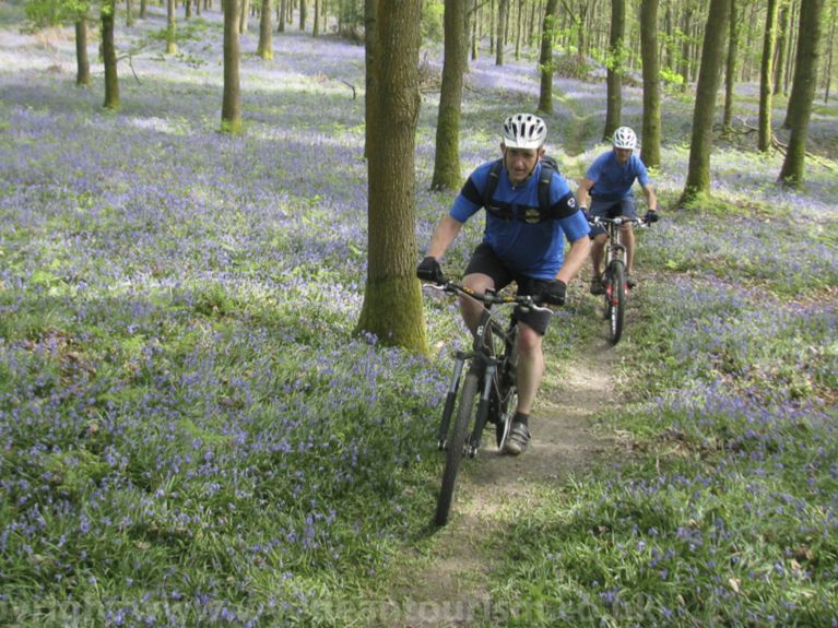 cycling in bluebell woods Forest of Dean